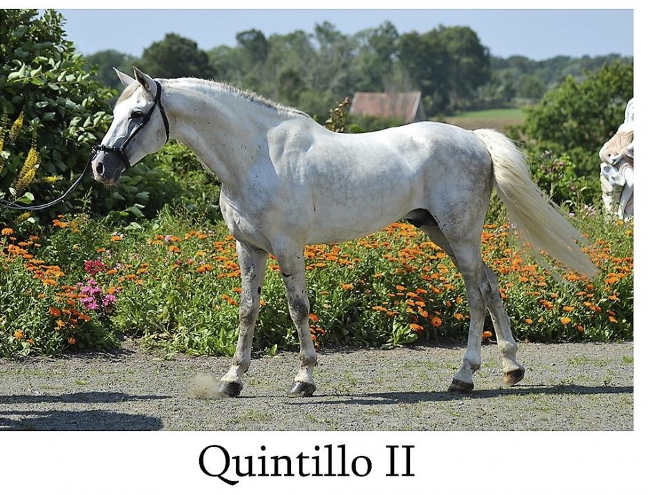 Quintillo II