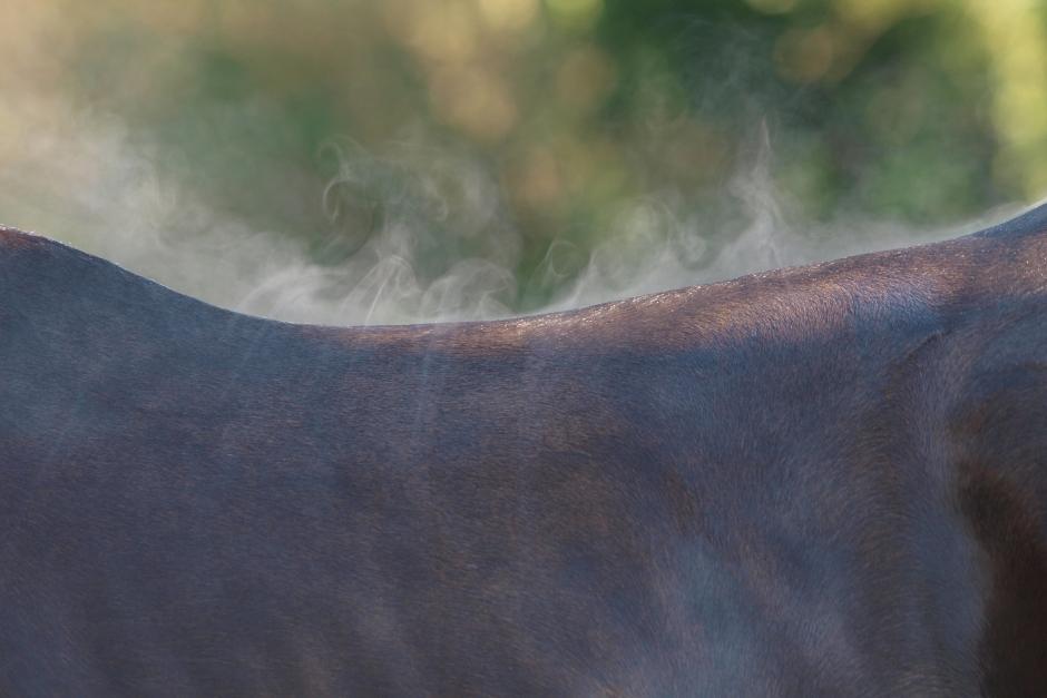 Nedsatt förmåga att svettas kan överhetta hästen