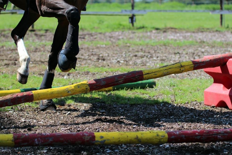 Träna unghästens rygg på bästa sätt