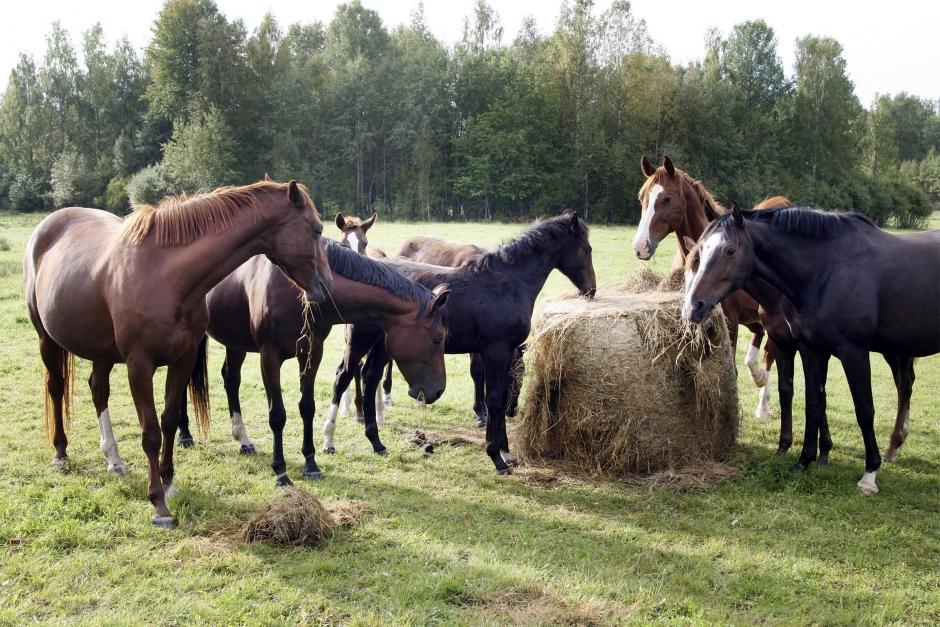 Broskbildning kan störa hästens tillväxt