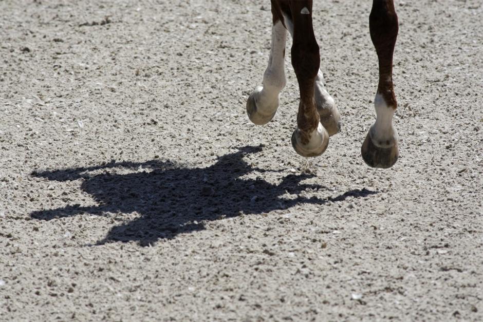 Karenstiden höjs för omtvistat hästläkemedel
