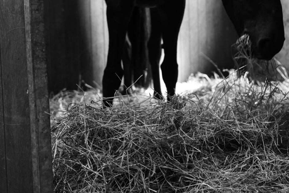 Flera hästar har skadats – belöning för avgörande tips