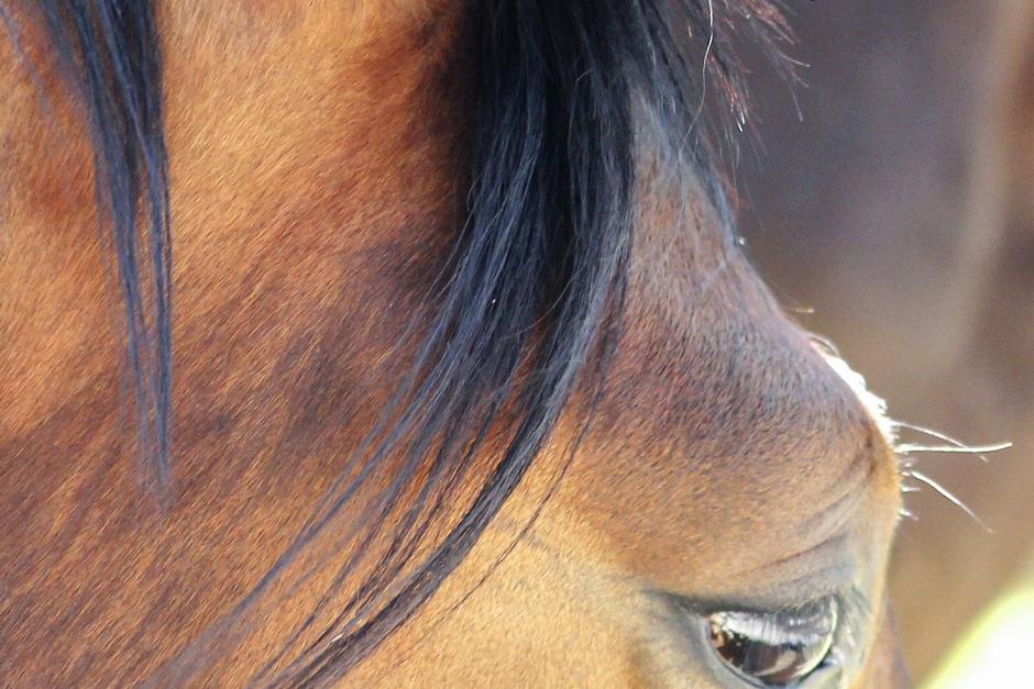Hästar vanvårdades till döds – böter efter hovrättens dom