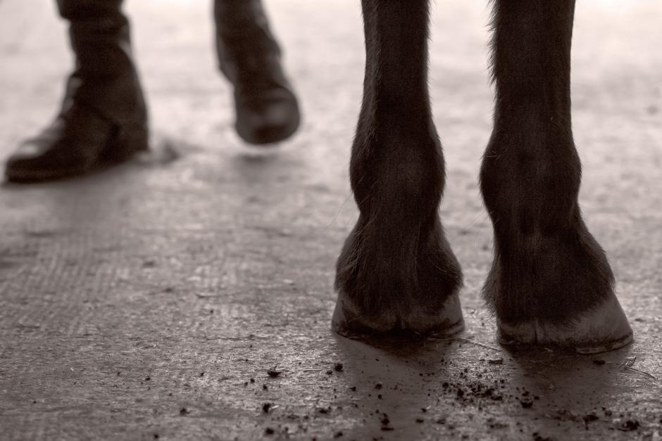 Kvinna får fängelse för att ha ljugit om berusning till häst