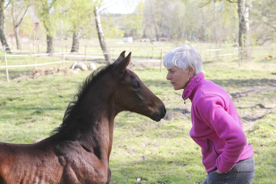 """Forskaren: """"Hästar föredrar människor med undergiven hållning"""""""