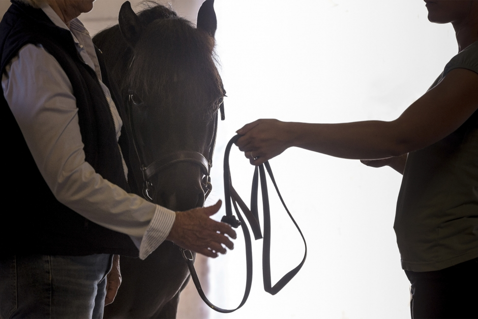 Löften inget värda när du säljer hästen