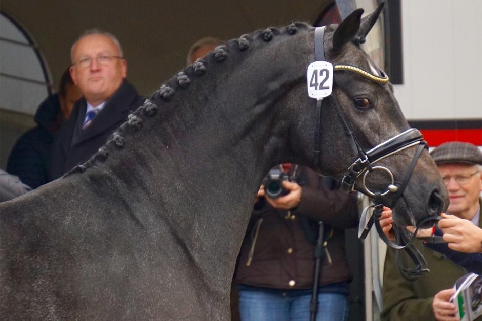 """Hingstbloggen: """"Dagens bästa häst är utan tvekan Londontime-Danone-sonen"""""""