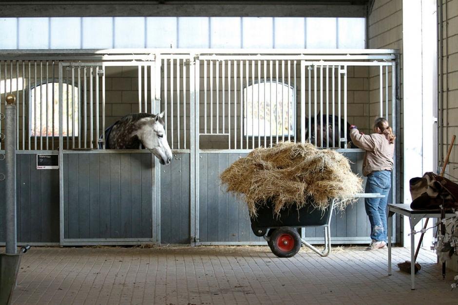 Hård granskning av hästföretag lyftes vid möte