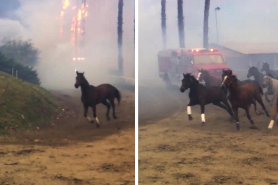 Fler hästar döda – otäcka scener när stall evakueras
