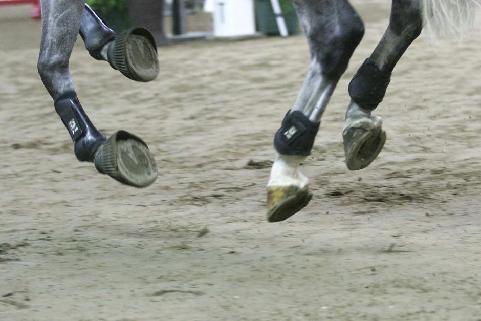 Ny utbildning ska ge nya hästföretagare hjälp framåt