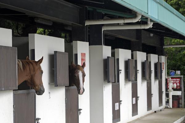 Hästhållare riskerar missa deadline för stallregistret