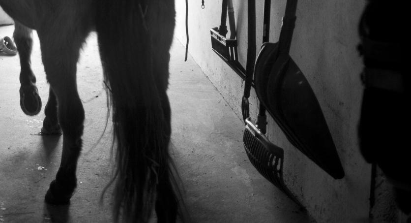 Två män förbjuds ha hästar på livstid efter grov vanvård