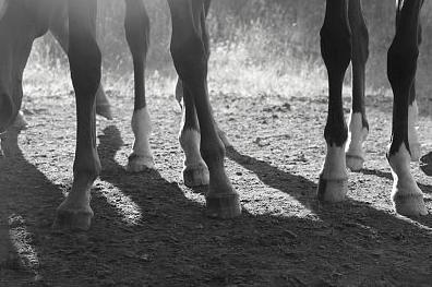 Hästen som krigshjälte hyllas i ny utställning