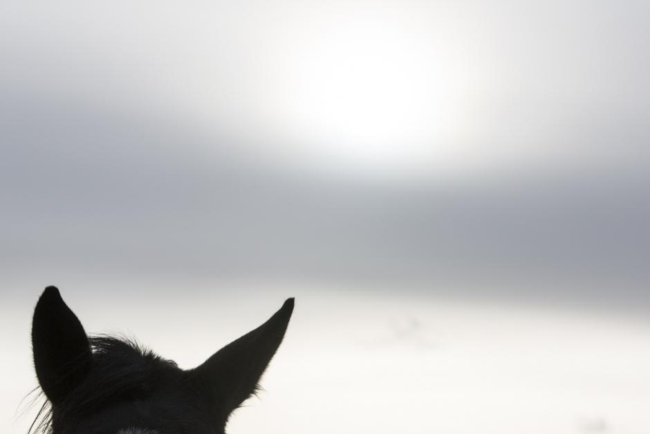 Hästar kan drabbas av depression enligt ny studie
