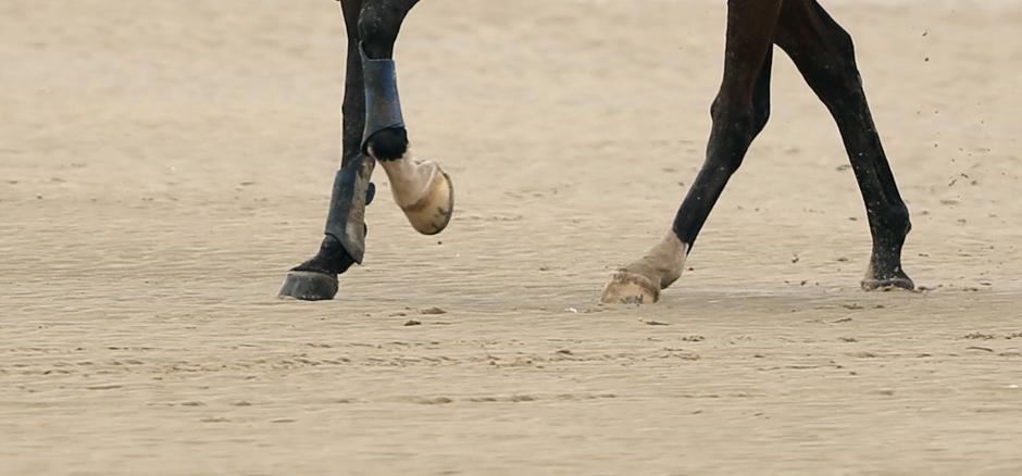 Tre distanshästar döda på en tävlingsdag