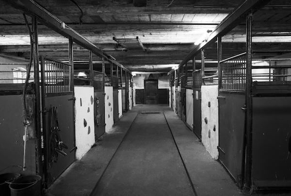 Djurskyddet och rättvisan