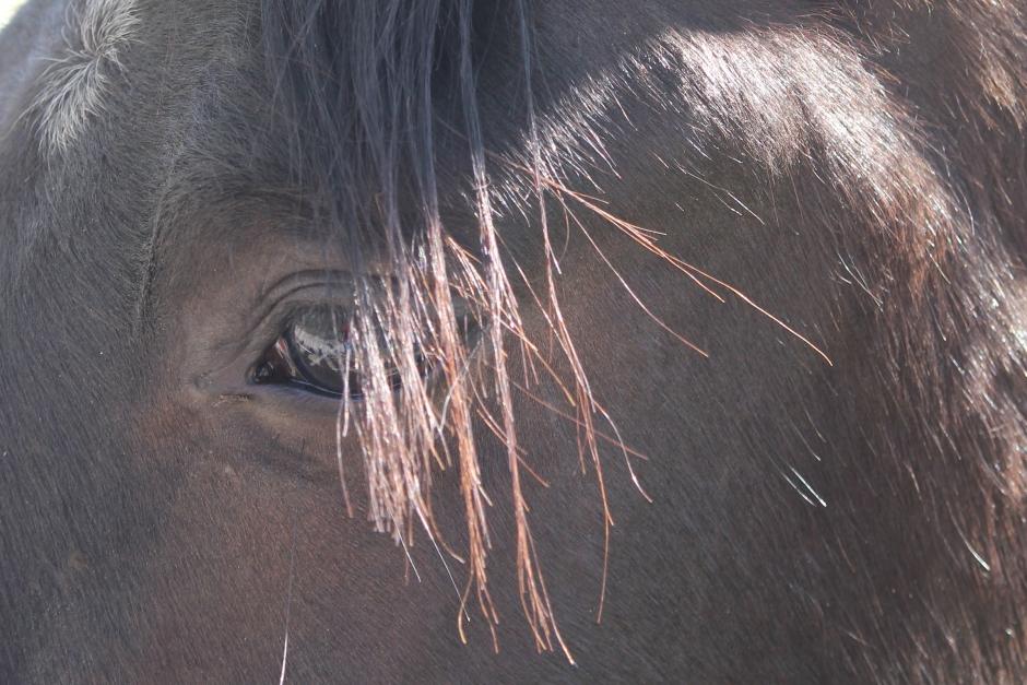 Flickor slog hästar med pinnar