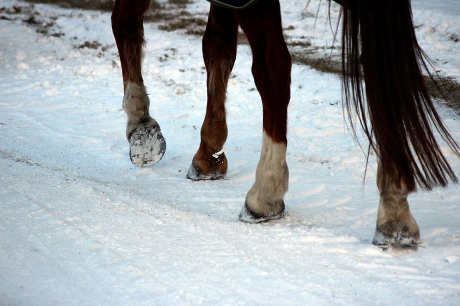 Ännu en häst avlivad efter nyårsfirandet