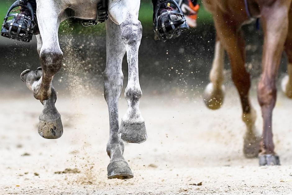 Hästar döda i distanslopp i UAE