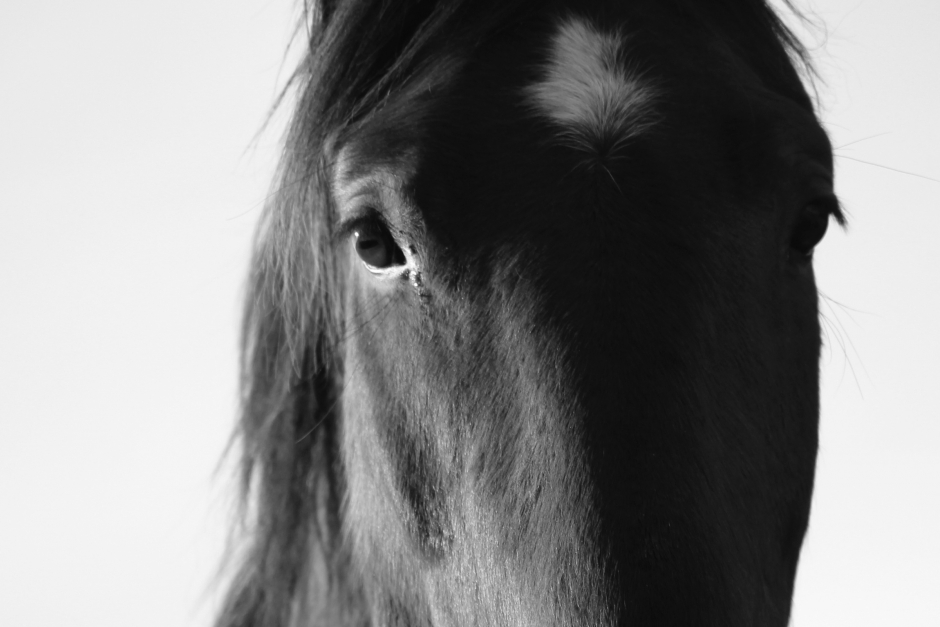 Ägare till nio hästar åtalas för vanvård