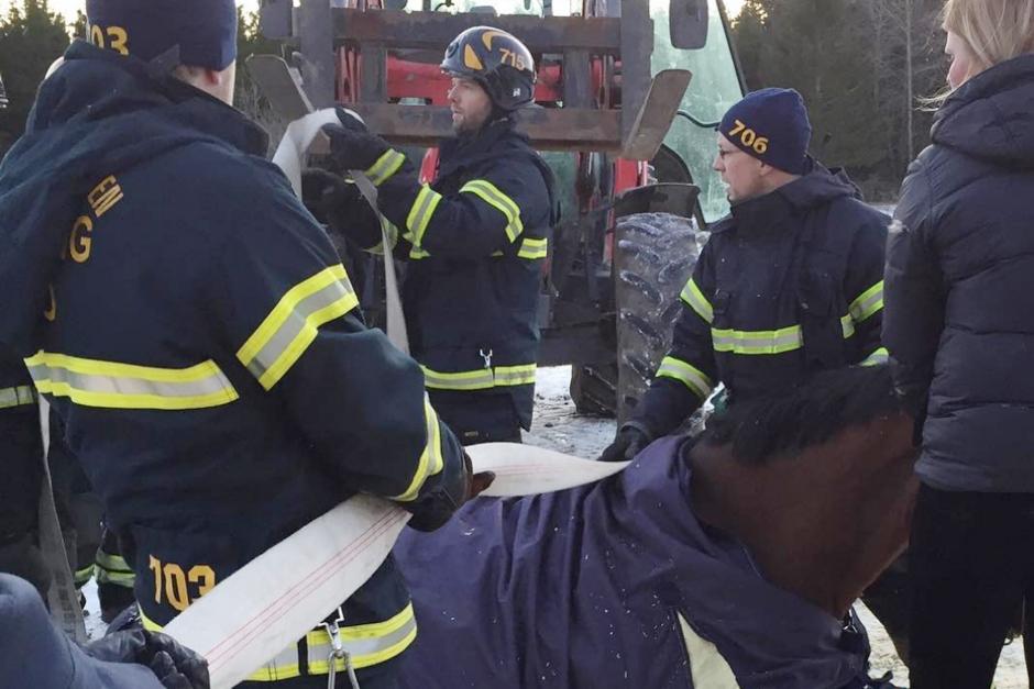 Snabb insats räddningen när GP-hästen råkade illa ut