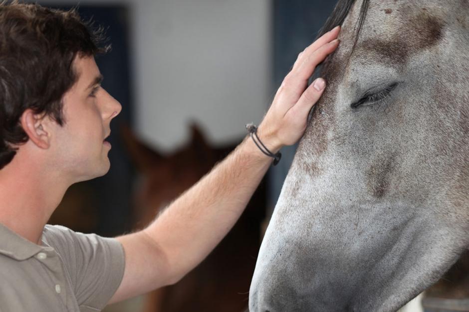 Försäkringsbolag öppnar upp för äldre hästar