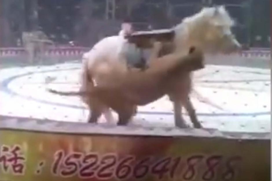 Film på cirkushäst som attackeras väcker avsky världen över