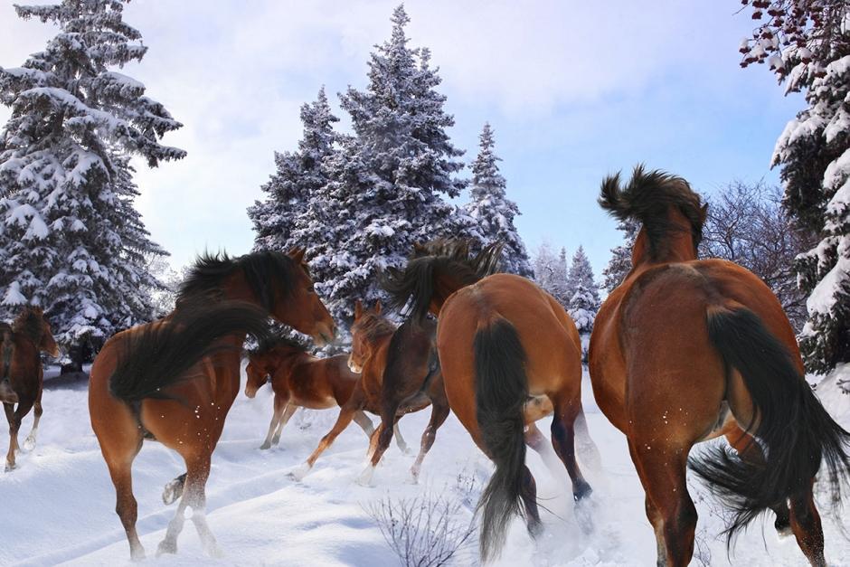Ridskolehästar på rymmen – fångades in på E22:an med polishjälp