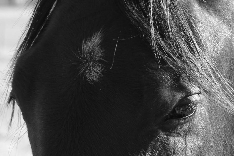 En häst dog – de fyra andra omhändertagna efter vanvård