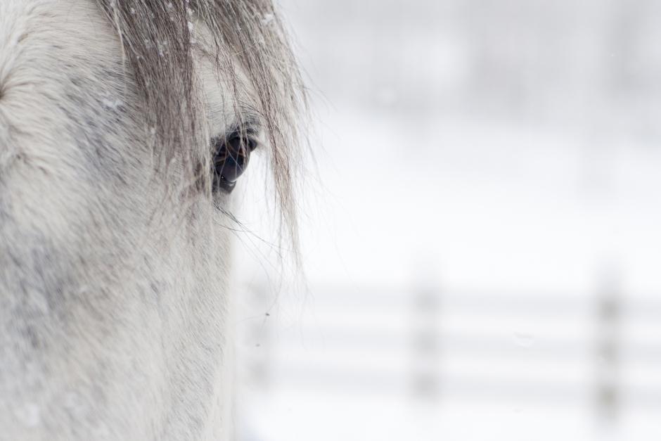 Misstanke: Någon tände eld på häst i natt