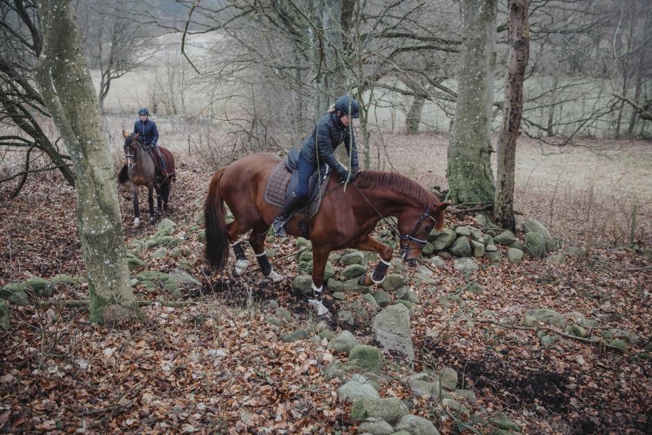 Fokus utomhus ger friska hästar hos dressyrstallet