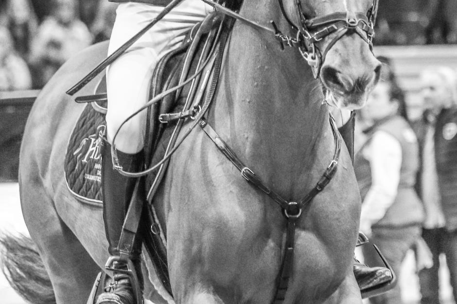 Förbyglar ändrar hästens språngkurva