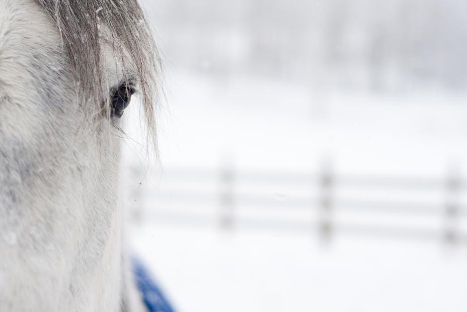 Djurskyddsinspektören fick rätt – måste inte avveckla hästverksamhet