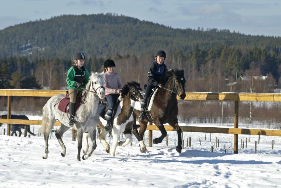 Lär dig belasta hästen på rätt sätt