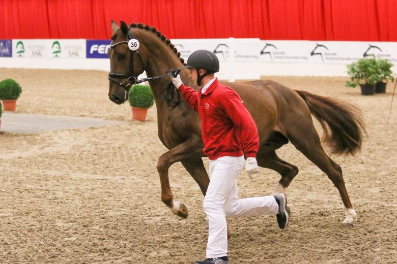 35 Straight Horse Sir Romance