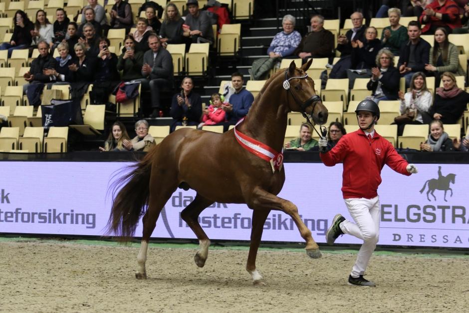 Springbank II VH segerhingst i Herning