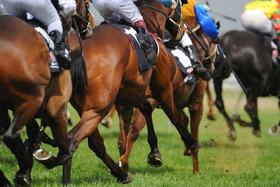 Sex hästar döda vid galopptävling