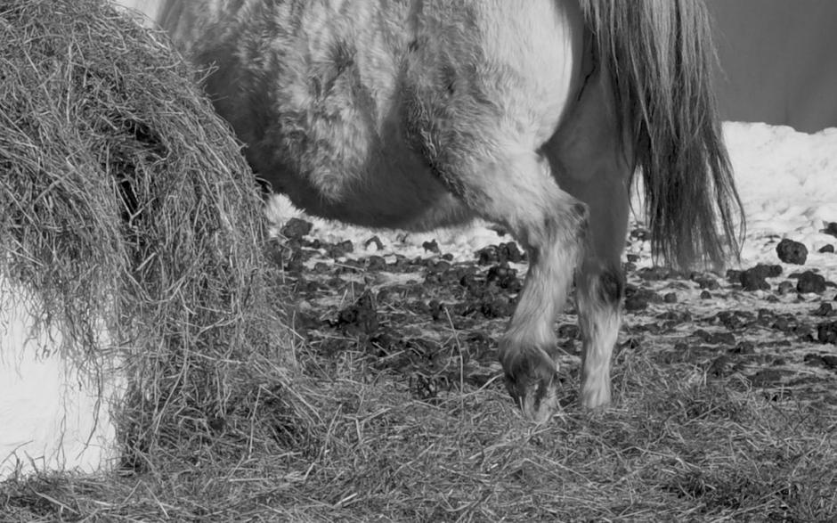 Långdraget djurskyddsärende – stort antal hästar återlämnade eller sålda