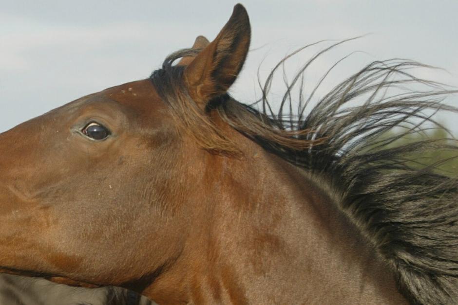 Häst sköts med luftgevär i hagen