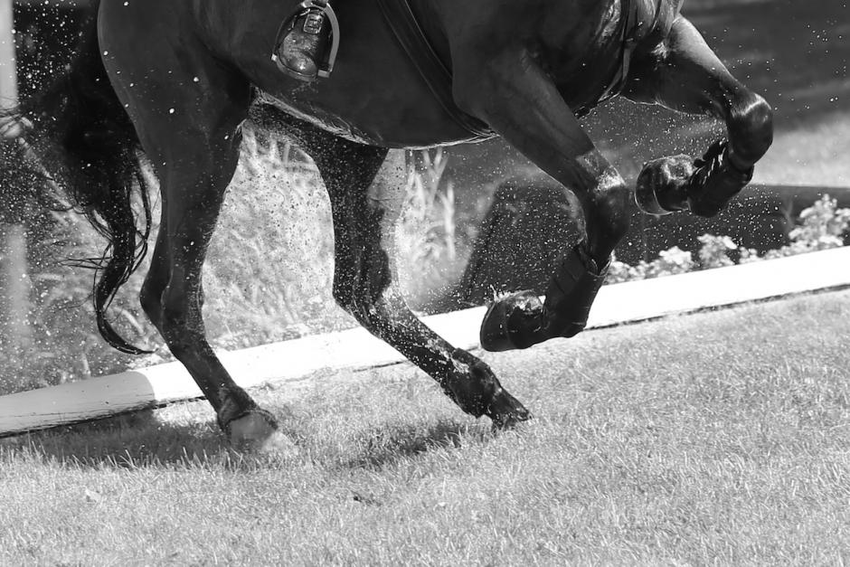 Flicka och häst omkom vid terrängträning