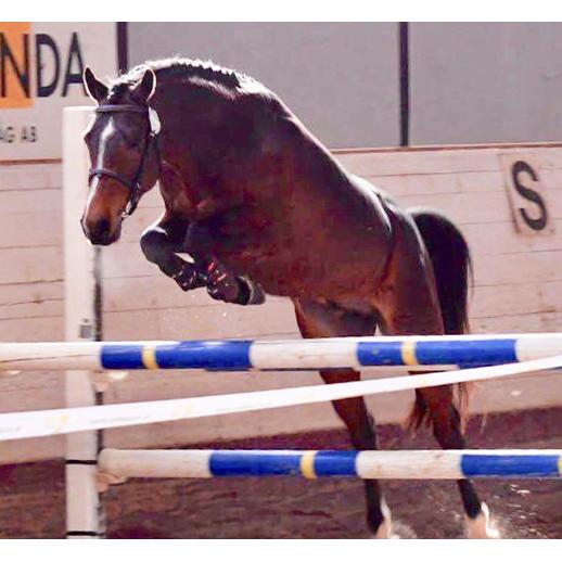 XTop Hästak