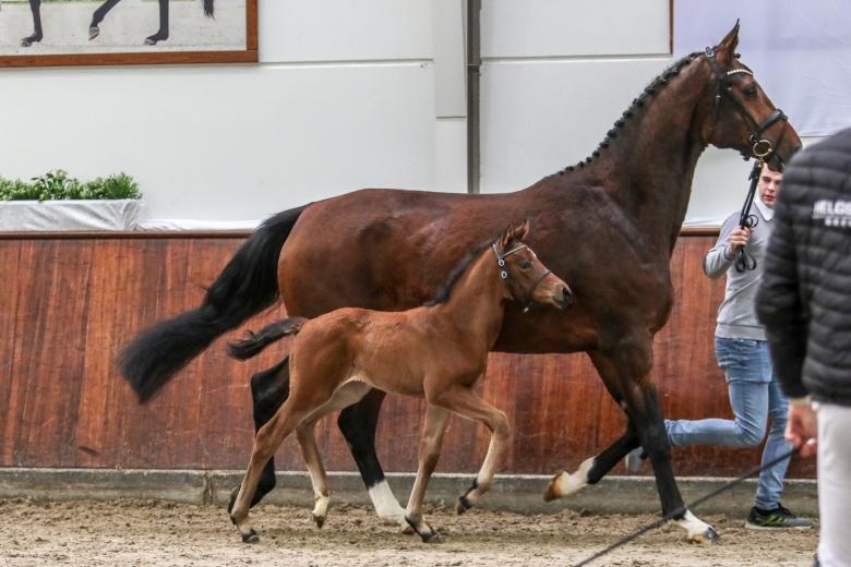 Valverde Föl Hh Horses