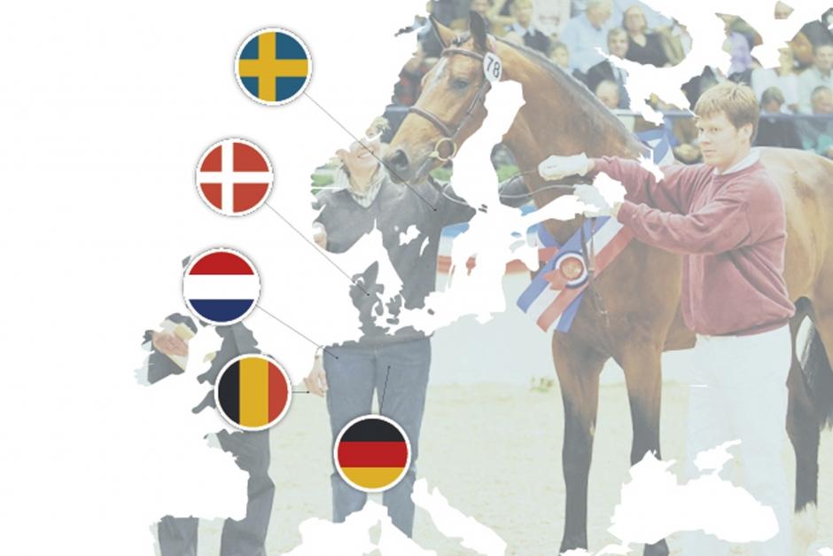 Så olika selekteras hingstar  i Europa