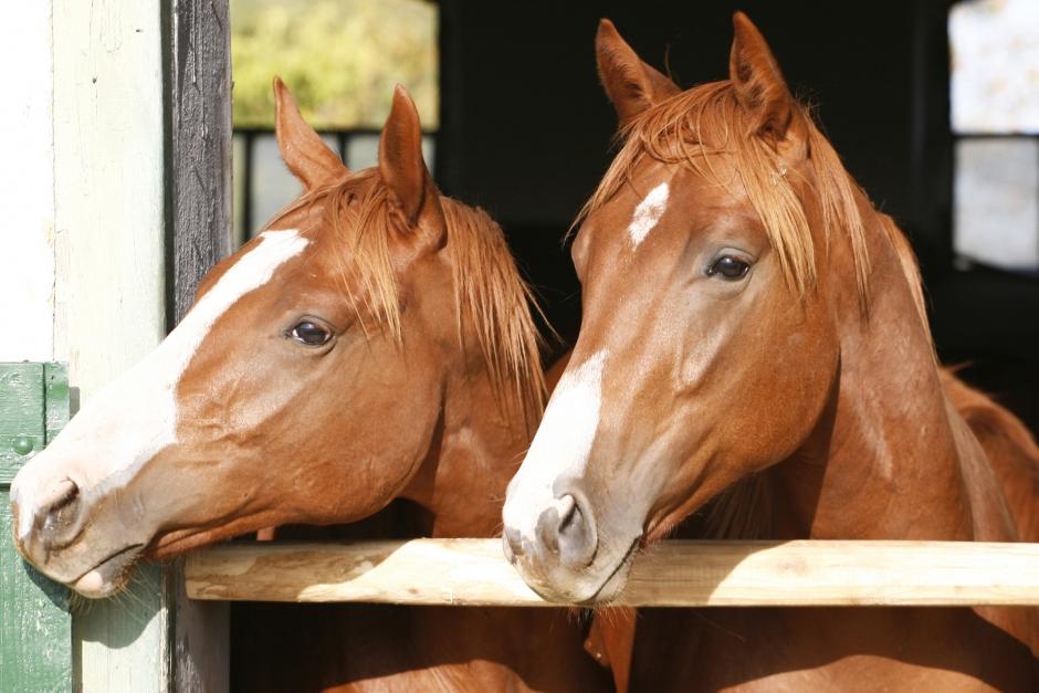 Statoil byter till hästklingande namn köpt av veterinär