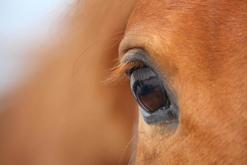 Häst död efter olycka vid sjö – ryttare varnas