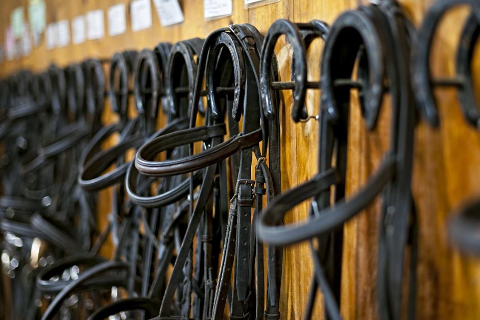 Bettlöst minskade smärtrelaterade beteenden hos hästar i studie