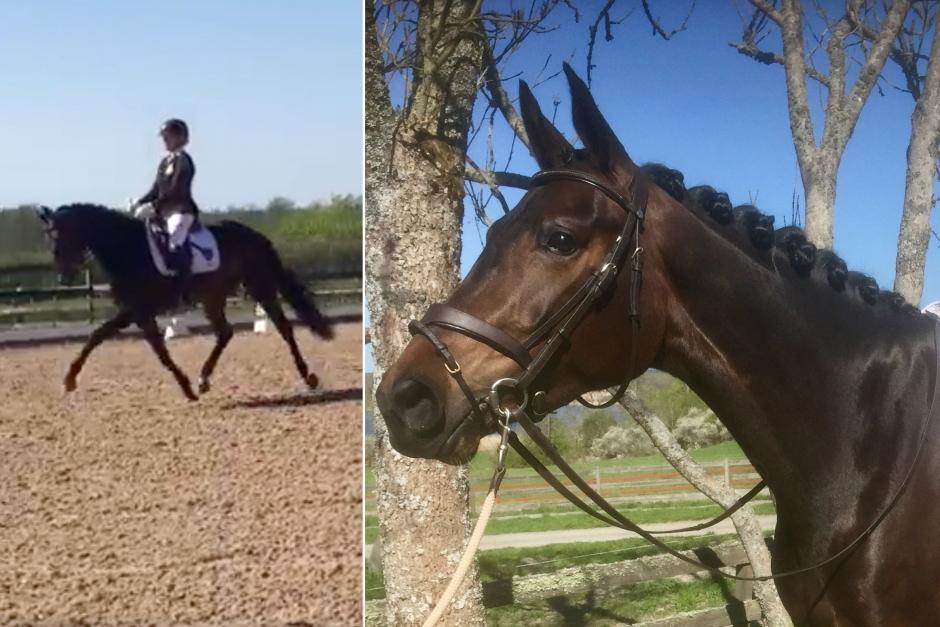 Rétina vann dressyrhästarnas första Falsterbokval