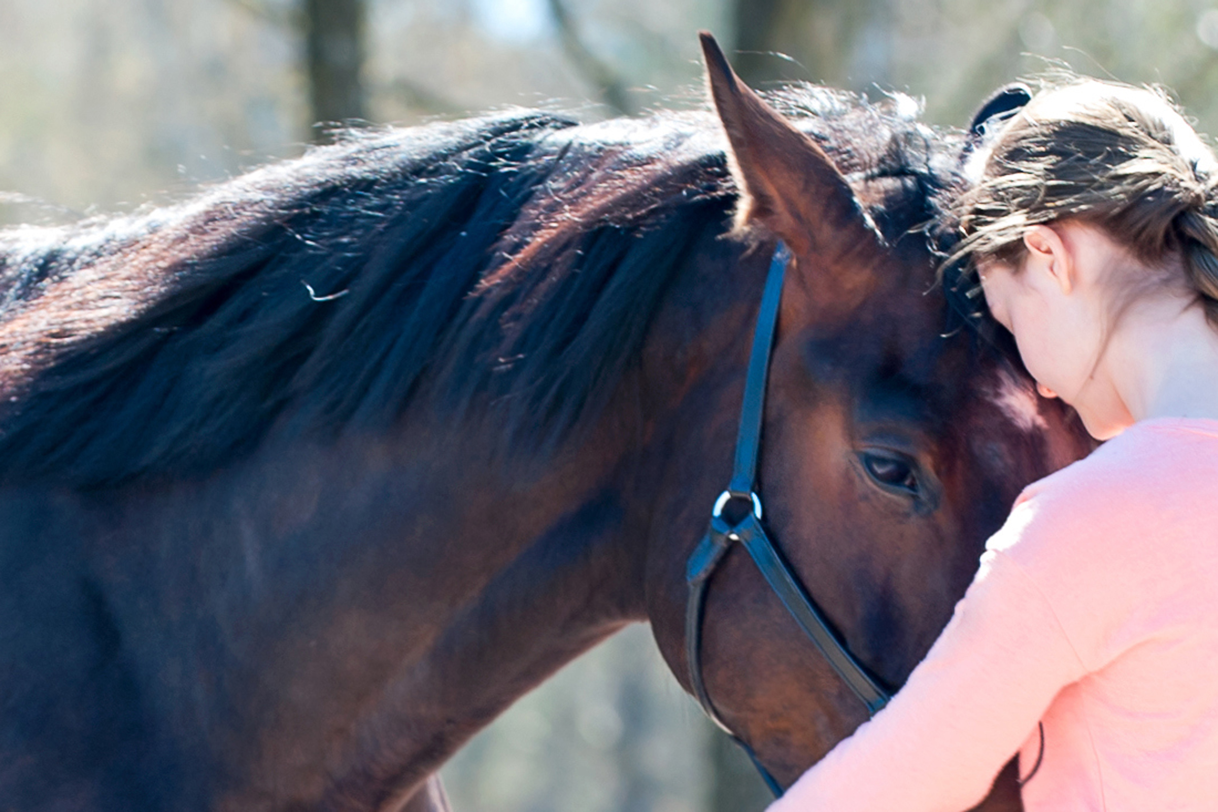 Young Teenage Girl Owner Hugging Her Favorite Horse