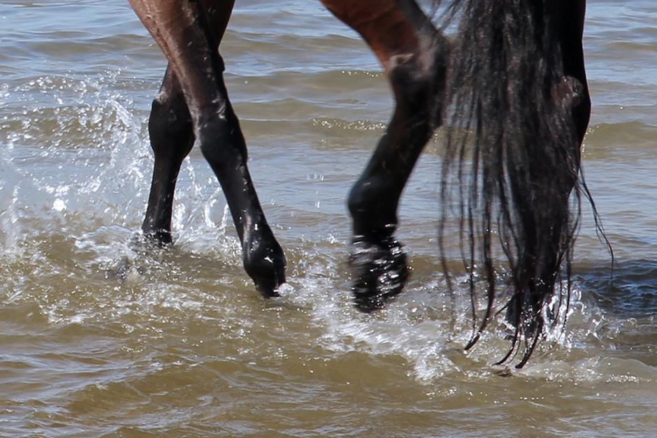 """Nej till hästbad: """"Hästar bajsar gärna i vattnet"""""""
