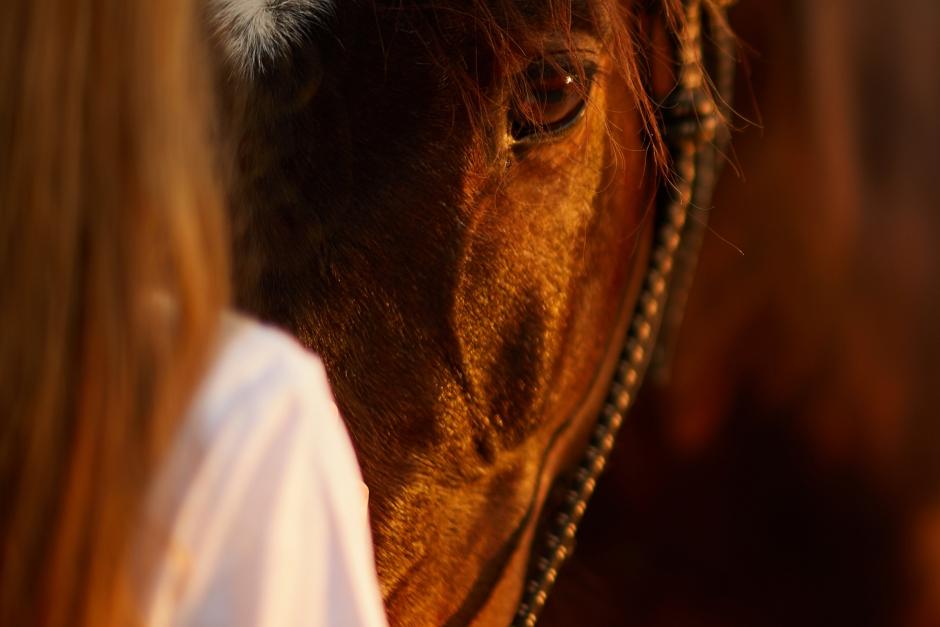 Elever på hästutbildning trakasseras